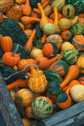 Gourds by screenname911