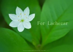 For Lachezar by Sisterslaughter165