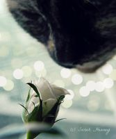 Stop and Smell the Roses by Lillith8810