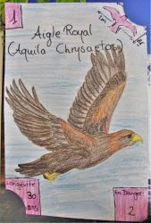 Swiss Nature Book: Golden Eagle - Aigle Royal by MoonyMina