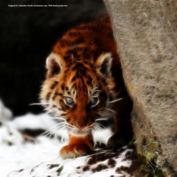 Tiger Cub by bastler