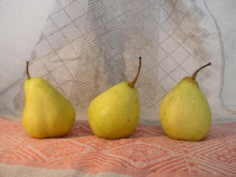 3 Pears by SanStock