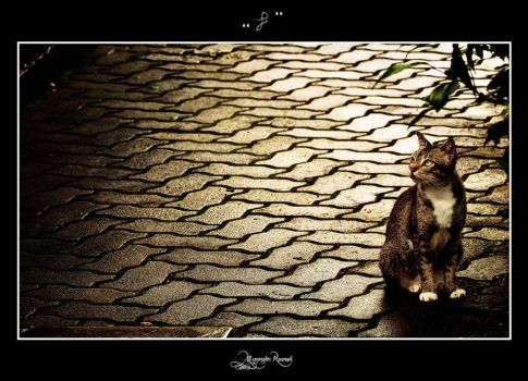 cat by pure52hart