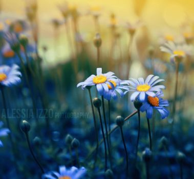 Sunny Spring by Alessia-Izzo