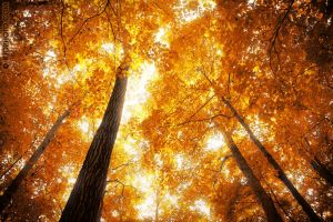 The Grace of Fall by rekit