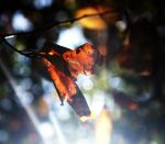 Leaf_Light by Kesline