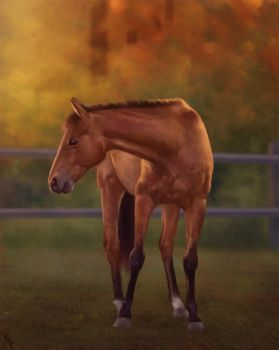 Horsey Study 2 Day #149 by AngelGanev