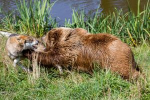 Wildpark Poing VI by ChristophMaier