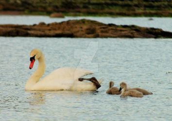 Family Outing by Crannogphotographic