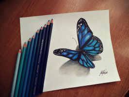 Butterfly by silent741