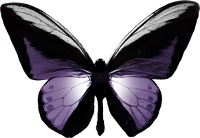 Pretty Butterfly png by yotoots