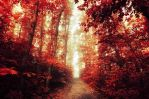 Red Forest VIII. by realityDream