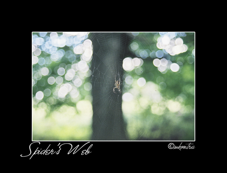Spider's Web by mags253