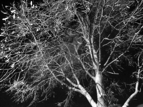 Black and White Nighttime Tree by JacobMcClure