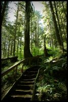 into the rainforest by omegach