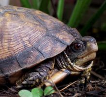 turtle by crawlintothesun