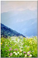 Caucasus mountain meadow... by Yancis
