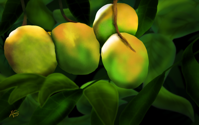 Mangoes-not quite ripe! by vanndra
