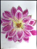 Pink Dahlia Oil Pastel by allysorge
