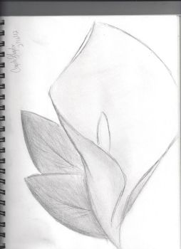 Calla Lilly by Knightmare42