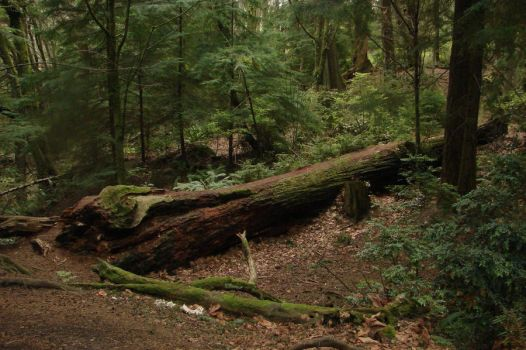 Dense Forest 03 by Miffliness-Stock