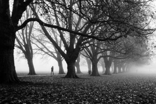 Foggy Path II (BW) by torobala