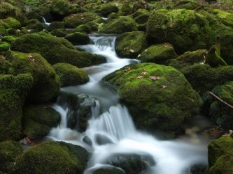 moss and water by Burtn