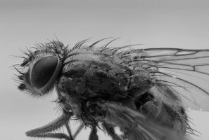 Fly Macro by Phy6