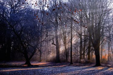 Enchanted forest - AStoKo FREE STOCK IMAGE by AStoKo