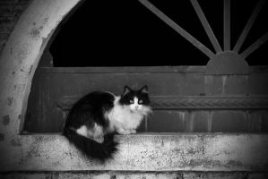 Black and white cat by Chechipe