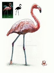 Flamingo Drawing by mezwik