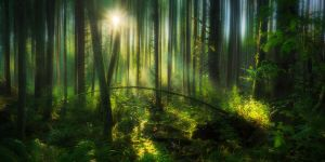 Forest Lines by Dee-T