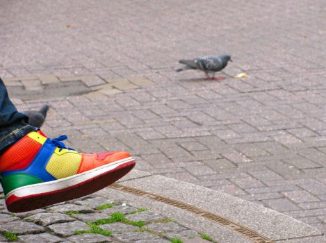 Colorful Pigeon by livinski