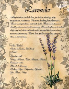 Book of Shadows: Herb Grimoire - Lavender by CoNiGMa