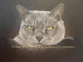 Burmese Cat by AngelaMende