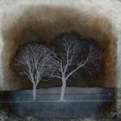 Speaking for trees by natdia