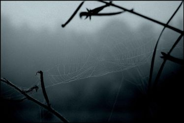 web in the mist by insaneone