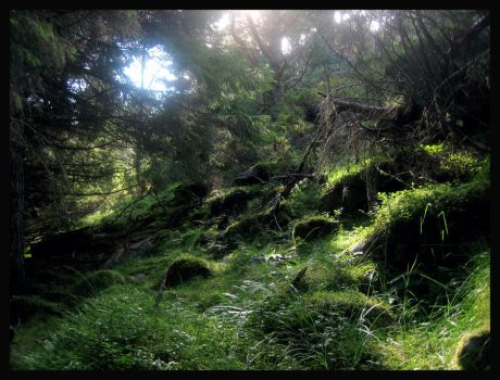 The Mystery of The Forest by dvartdal