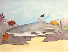 Blacktip Reef Shark Painting by atreyu917