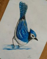 G ~ Blue jay by yikoo