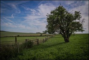 Lonely summer place by LiveInPix