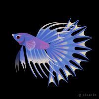 Crowntail betta by pikaole