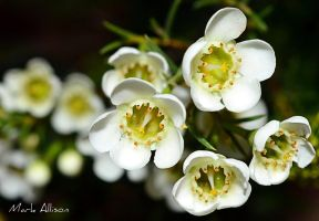 Small and white by Mark-Allison