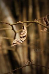 Still hanging on by serel