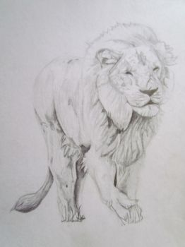 White Lion by PhoenixAngelRVS