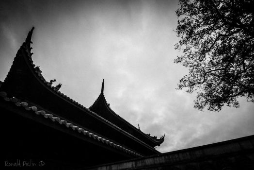 IMG 5419 by roon1305