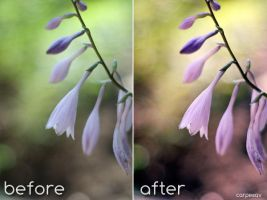 Spring Fever-Photoshop Action by CarpeSav