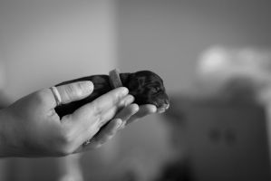 1 day old puppy by BenBrotherton