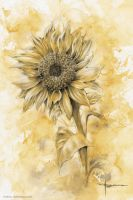 Sunflower by mekhz