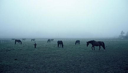 Horses in fog by AndreaGerak